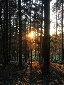 Forest at Sunset - Dartmoor UK