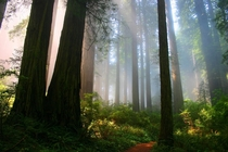 Forest in California  credit to udrainsworth