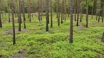 Forest in Stockholm Sweden damaged by a forest fire  years ago