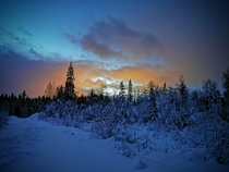 Forest just outside the town of Mo i Rana northern Norway Spectacular scenery in the twilight early desember  OC