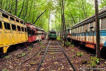 Forest of forgotten streetcars in Pennsylvania  by Sherman