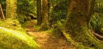Forest Path along the Oregon coast