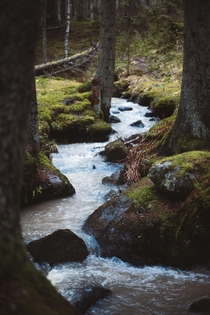 Forest Stream in Paimio Finland