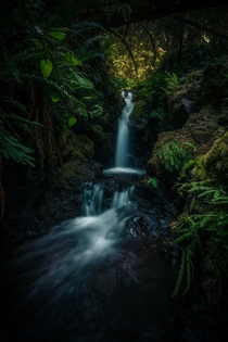 Forest waterfall scenes on Orcas Island Washington