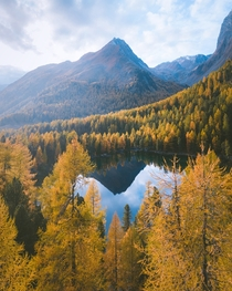 Forests of gold in the Swiss Alps