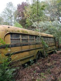Forgotten school bus