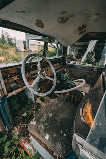 Found this abandoned car Austin Jeep in rural Canada