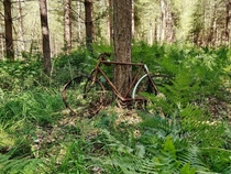 Found this bike while having a walk in a forest in Normandy