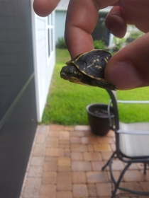 Found this little guy on my back patio this afternoon Tiniest turtle Ive ever seen