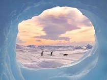 Freeze Frame Emperor Penguins Antarctica photo by Keith Szafranski