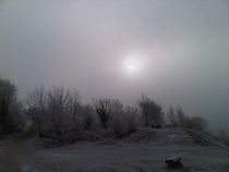 Freezing fog on Leckhampton Hill Cheltenham England
