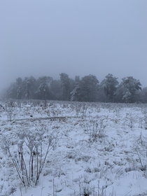 Fresh snow and fog this morning blanketing Cannock Chase UK