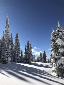 Fresh snow in Steamboat Springs CO