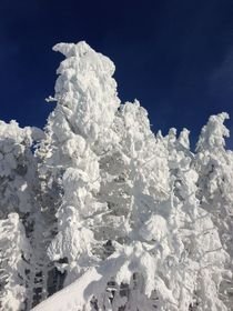Fresh Snow in the Laurentians Quebec