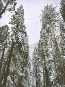 Fresh snow in Yosemite Valley  OC