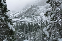 Fresh Snow in Yosemite Valley x