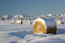 Fresh snow on Bales of Hay