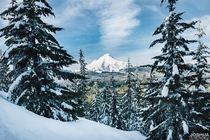 Fresh snow on Mt Hood Oregon