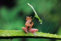 Frog in the rain x-post from rpics