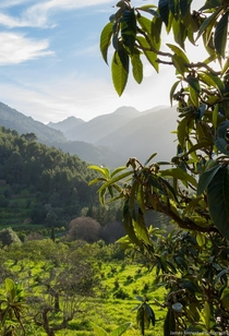 From last week taken at the outskirts of Soller Majorca Spain shortly before sunset