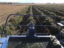 From the drivers seat on the first day of grape harvest Yakima Valley Washington state