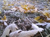 Frosty Fall Grass