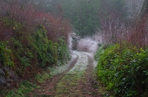 Frosty path in Silverdale Washington -