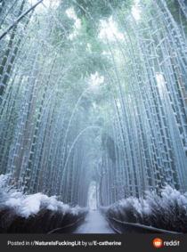 Frozen bamboo looks magical