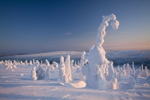 Frozen Forest Finland