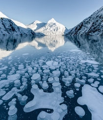 Frozen layered bubbles in Portage Lake Alaska  insta green_cale