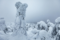 Frozen snow aliens or something else Somewhere high up in a dense forest near Ruka on the Russian-Finnish border Finnish Lapland  OC IG arvindj