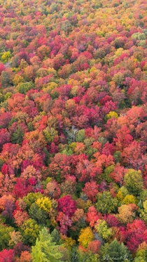 Fruity Pebbles Fall in the Adirondack Mountains NY Full res file in comments