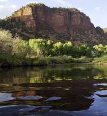 Frying Pan River near Basalt Colorado  x  OC