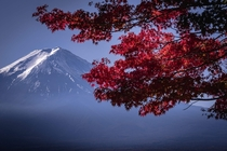 Fuji through the trees at Kawaguchiko Japan  OC