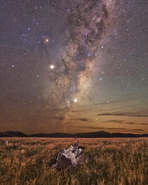 Galactic core rising over a dead Totara tree in Banks Peninsula Canterbury New Zealand