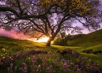 Garden of Sunol by Victor Carreiro sunset at Sunol Regional Park last Spring