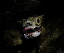 gargoyle head in the Parisian catacombs utr_inf