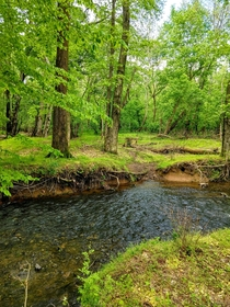 Gentle creek surrounded by green in Delaware