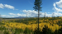 Getting lost in Pike National Forest CO never looked so pretty