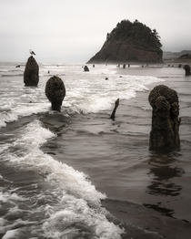 Ghost forest Neskowin OR Trees petrified after earhtquake turned tsunami over  years ago