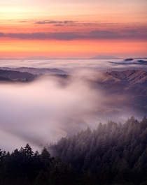 Ghostly Foggy Flow from Mt Tamalpais State Park California