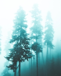 Ghostly trees shrouded in cloud up on Whistler Mountain in British Columbia Canada  Social mikemarkov