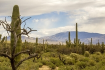 Giving more love to the desert Gazing towards the Rincon Mountains in late winter Sabino Canyon AZ
