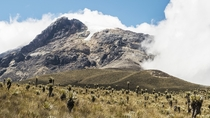 Glaciated volcano flanked by frailejones at Nevado Tolima Colombia