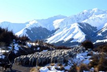 Glenthorne Station Southern Alps New Zealand