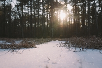 Glistening snow in an opening in Willowdale state forest Massachusetts x OC