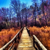 Go where the broken wood bridge takes you Bartram Forest Milledgeville GA