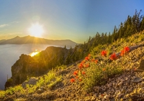 Golden Castilleja - Crater Lake OR