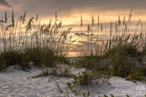Golden hour in a beach sand dune at Boca Grande Beach in Florida