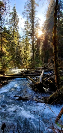 Golden hour in the Olympic rainforest